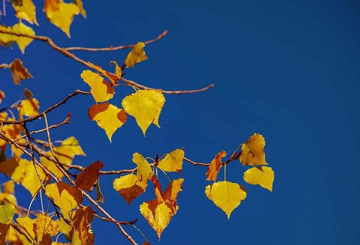 анализ стихотворения аромат солнца бальмонт