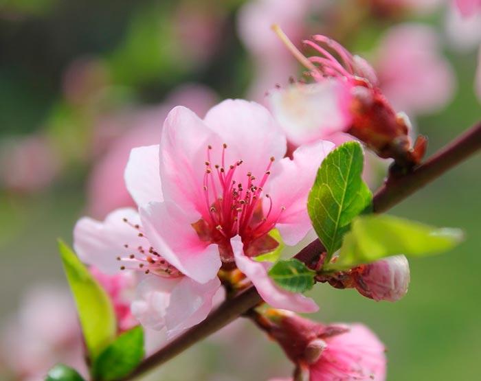 Сочинения на тему Весна более штук  Весна