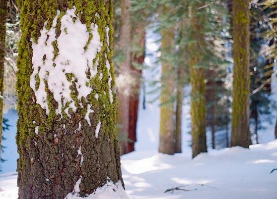 краткое описание зимнего леса